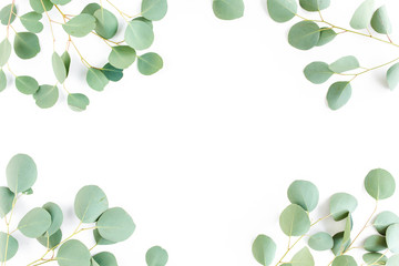 Wall Mural - frame of green branches, eucalyptus leaves on a white background. flat layout, top view