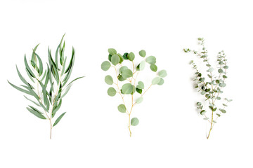 Wall Mural - Mix of herbs green branches, leaves eucalyptus and plants collection on white background. flat lay, top view