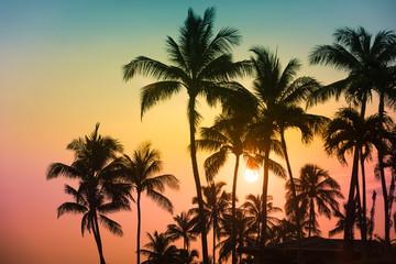 Tuinposter Palm boom Tropical island sunset