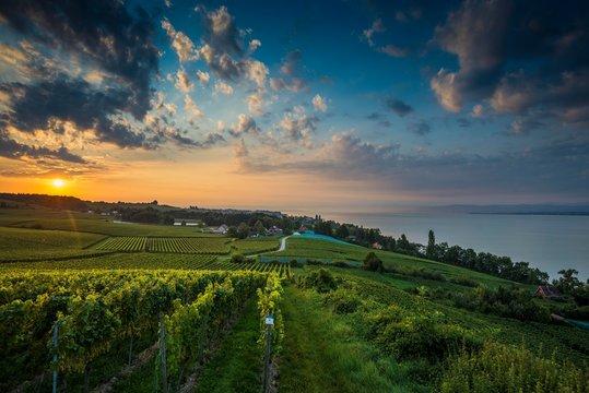 Vineyards between Hagnau and Meersburg, sunrise, cloudy sky, Lake Constance, Baden-Wurttemberg, Germany, Europe