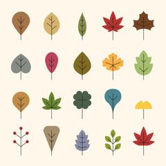 various kind of autumn leaves.  flat design style minimal vector illustration