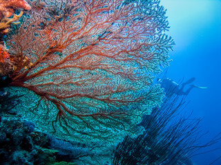 Corals at the bottom of the sea.