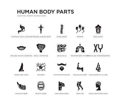 set of 20 black filled vector icons such as male head side view with brains, male nose of a line, masculine chromosomes, men chest, men leg, men shoulder, smiling mouth showing teeth, sperms, spine