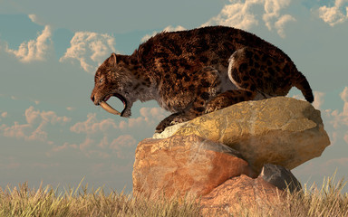 A saber-toothed cat stands atop a boulder on a grassy plain. The ferocious prehistoric predator bears his wicked curved teeth as he looks across the golden grass. 3D Rendering Wall mural