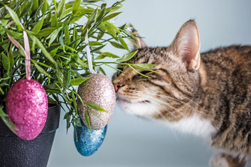 Cat and Easter eggs. A curious cat looks at the painted eggs that hang on the branches of the plant. Background about Easter. Cat on Easter background with  Easter eggs