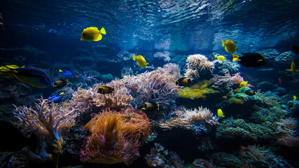 In de dag Koraalriffen underwater coral reef landscape with colorful fish