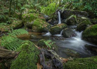 Stream of water flows between mossy rocks and fallen trunks