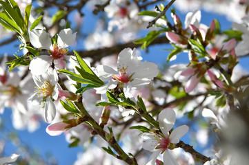 fresh white spring flower petals