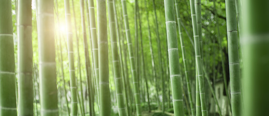 Printed roller blinds Bamboo Bamboo forest in Japan