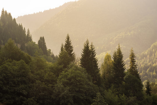Natural landscape with view of coniferous forest in mountains, lit by sun. Green mountains of Georgia. Tourism and travel.