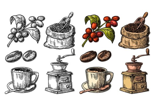 Sack with coffee beans with wooden scoop and beans, cup, branch with leaf and berry.