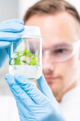 Pflanze wird im Labor für Umwelt und Gesundheit geszüchtet