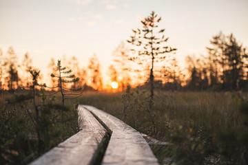 Makeshift boardwalk of wooden planks through marsh