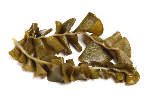 japanese seaweed, mekabu, wakame root on white background