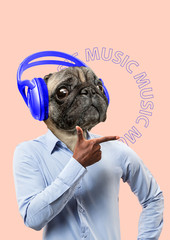 Obraz Meloman may be different. Music is available for everyone. Alternative view of pets. Man in shirt headed by dogs or pugs head with big blue headphones. Modern design. Contemporary art collage. - fototapety do salonu