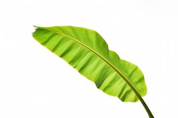 Full banana leaf isolated on white background