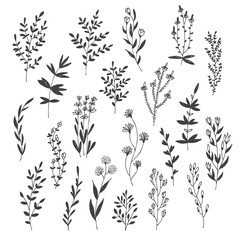 Hand drawn vector set with floral elements, herbs, leaves, flowers, twigs, branches