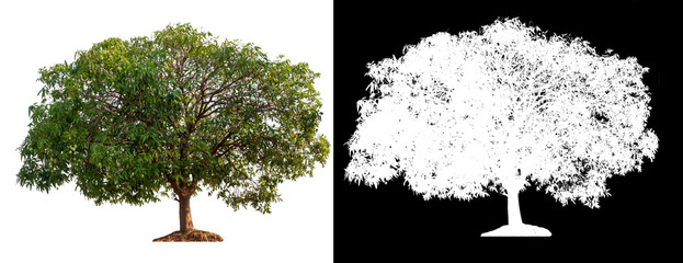isolated tree on white background Wall mural