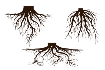 Set of Life tree with roots . Vector illustration icon isolated on white background.