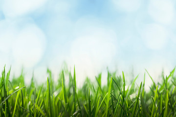 Wall Mural - Green grass and blue sky background, sunny green meadow, fresh lawn and sky