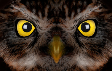 Photo sur Plexiglas Croquis dessinés à la main des animaux portrait of an owl with yellow