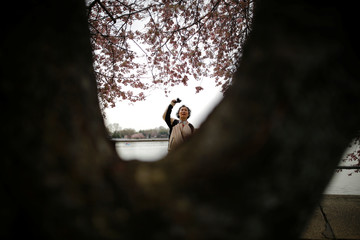 A woman takes pictures along the Tidal Basin as cherry blossoms begin to bloom in Washington