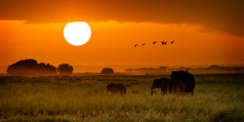 Wall Mural - African Elephants Walking at Golden Sunrise