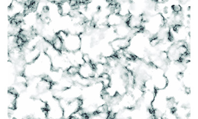 White marble texture Vector background