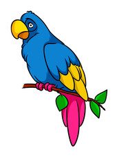 Parrot macaw bird animal character cartoon illustration isolated image