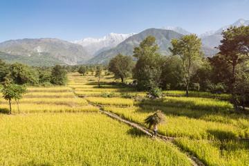 Himachal landscape