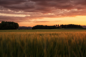 Fotoväggar - Oberpfälzer Abendrot