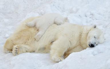 Deurstickers Ijsbeer polar bear in the snow