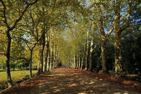 Park near Chateau de Chenonceau, France