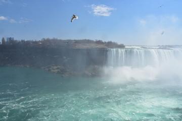 Keuken foto achterwand Europese Plekken Bird Flying over Niagara falls