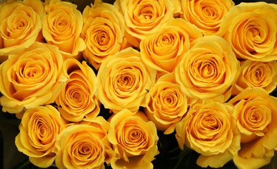 Wall Mural - Flower background of yellow rose