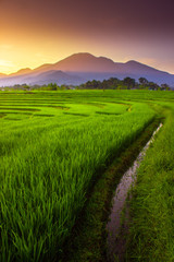 natural portraits of rice fields and mountains in rural Indonesia with sunrise and green morning dew in Indonesia natural beauty of bengkulu utara indonesia with mountain barisan and green nature