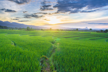 morning sunrise light at paddy fields green island natural beauty of bengkulu utara indonesia with mountain barisan and green nature