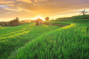 panorama paddy fields in north bengkulu indonesia natural beauty of bengkulu utara indonesia with mountain barisan and green nature