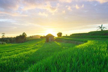 amazing light sunset at paddy fields indonesia natural beauty of bengkulu utara indonesia with mountain barisan and green nature