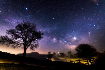 富士山と星空と木