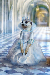 Beautiful cute princess (mouse, meerkat) in long light blue dress walks through corridors of fabulous palace, fairy godmother of Cinderella, fantasy poster
