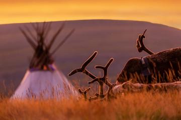 Deer near the choom at sunrise Wall mural