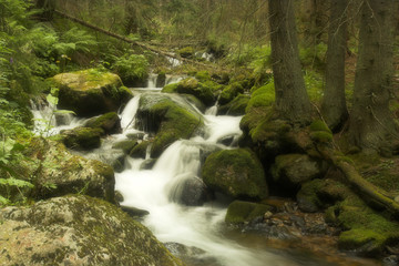 Forest Brook with cascades