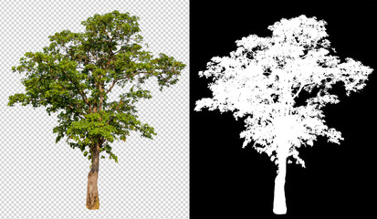 single tree on transparent picture background with clipping path, single tree with clipping path and alpha channel on black background Fototapete