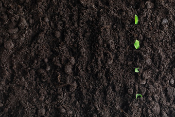Seeds in the ground. Seed preparation for planting in the spring. Wall mural