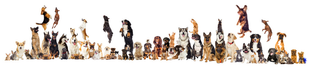 Wall Mural - set, group of pets