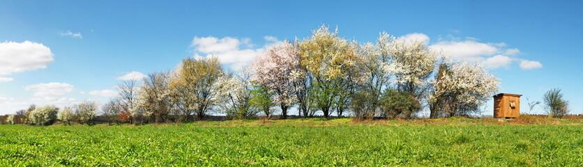Fotoväggar - Bäume blühen am Feldrand - Panorama