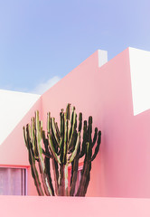 Printed roller blinds Cactus Plants on pink concept. Cactus on pink wall background. Minimal plant art