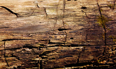 Old wood background. Gorizontal natural wooden texture