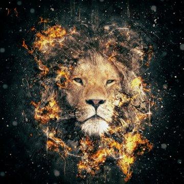 Wild animal, face of Lion
